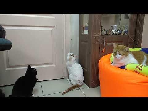 Коты небывалой красоты