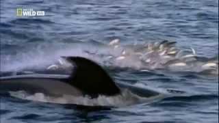 Самые опасные животные - морской мир