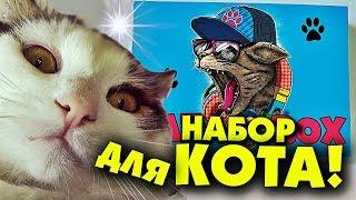 НАБОР КОТА / CAT