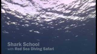 Shark Shool Workshop