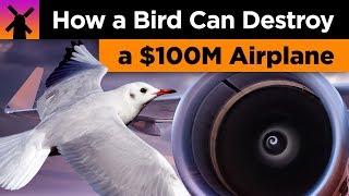 How a Bird Can Destroy a $100 Million Airplane