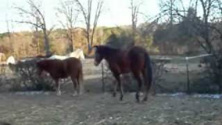 Marshall is a Blind Horse - Dogwood Lane Horse Sanctuary