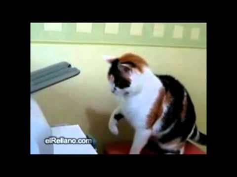If there are still people on the world that believe that cats do not have human moments, watch this...