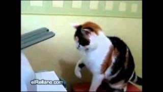 Cat Vs Printer Video