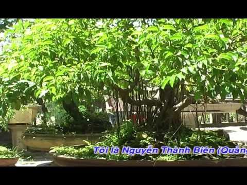 Vườn cây cảnh của anh Nguyễn Thanh Biên P1