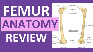 Femur Bone Anatomy Lecture and Landmark Markings