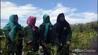 preview picture of video 'MANAJEMEN AGRIBISNIS_SUBSISTEM HULU    KELOMPOK 4'