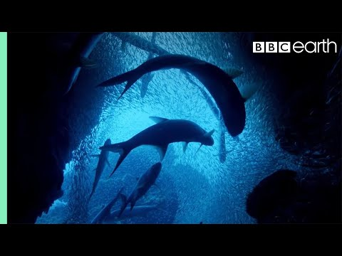 ONE HOUR Of Amazing Ocean Moments | BBC Earth