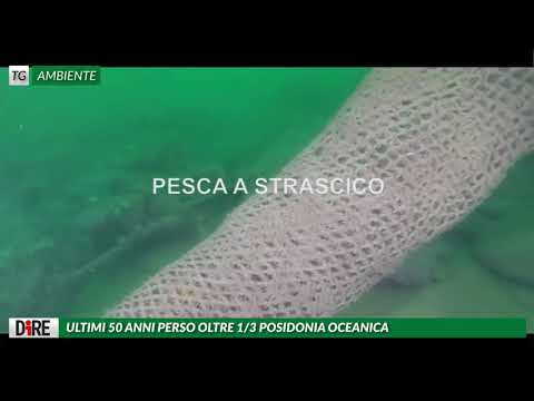 AGENZIA DIRE : TG AMBIENTE A BREVE LEGGE PER RECUPERO PLASTICA