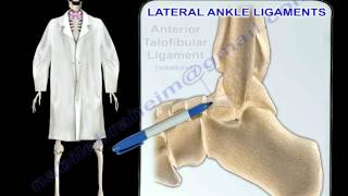 Ankle Ligaments Anatomy - Everything You Need To Know - Dr. Nabil Ebraheim