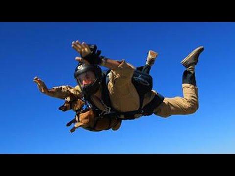 Dachshunden Riley hopper i fallskjerm