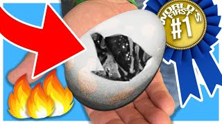 LAST SNAKE EGG EGG WE HIT THE WORLDS FIRST!! | BRIAN BARCZYK