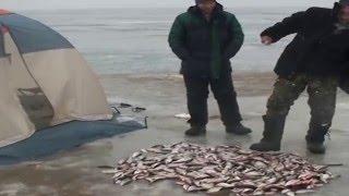 Ловля плотвы зимой на цимлянском водохранилище
