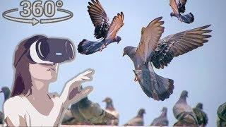 Панорамное Видео 360 VR 4K для очков виртуальной реальности. Кормлю голубей