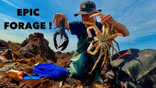 FORAGING BIG SPIDER CRAB & LOBSTERS - Epic Coastal Forage , Cooking Sea Food On The Beach !