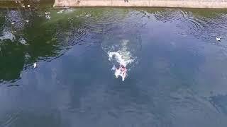 Медленно падающий в озеро дрон и пытающийся спасти его владелец