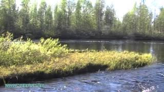 Рыбалка на реке пане кольский