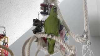Попугай поёт лучше людей - Макеша