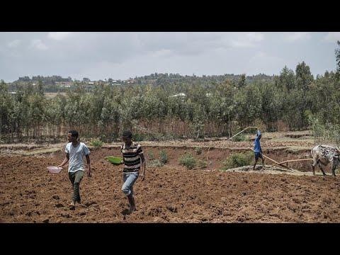 Éthiopie : le vent nouveau du nationalisme en région Amhara Éthiopie : le vent nouveau du nationalisme en région Amhara