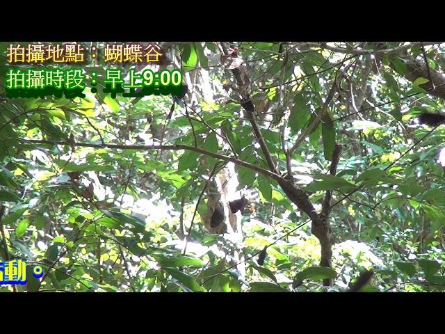 <html> <body> Film for Purple Butterfly2019-12-09 </body> </html>