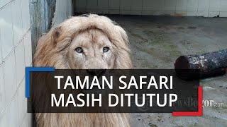 PSBB Transisi, Taman Safari Indonesia di Cisarua Bogor Masih Tutup