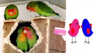 Love Birds||valentine's day|How to Draw Love Birds Holding Hearts on Valentine's Day|Love Birds Art - Video Youtube