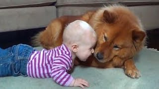 CUTE DOG TRYING TO TALK TO BABY   Dog loves baby Compilation