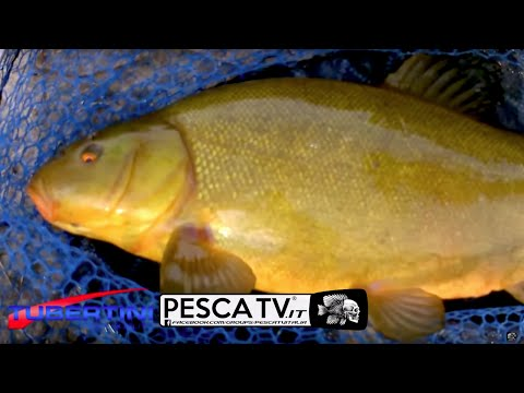 Lago olmo grande pesca di regione di Pskov