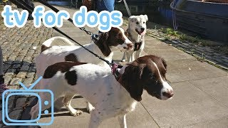 Dog Watch TV! 8 Hours of TV and Relaxing Music for Dogs - CITY DOG WALK! NEW 2018!