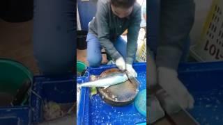سمكة الكنعد . احد اسواق السمك في بتايا تايلند .. mackerel fish , One of the fish markets in Pattaya