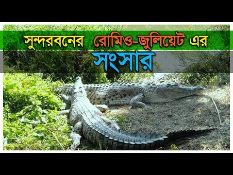 সুন্দরবনের ভালোবাসার প্রতীক দুই কুমির। First Crocodile Breeding Farm in Bangladesh