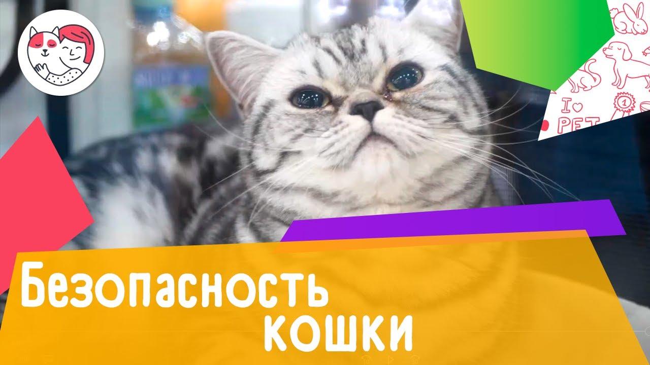 6 правил обеспечения безопасности кошек в новогодние праздники