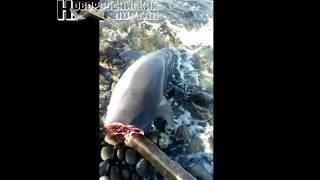 Тело дельфина выкинуло в Новороссийске, убрать его некому (+18)