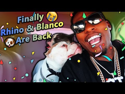 I Finally Got My Dogs Rhino & Blanco Back!