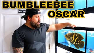 UNBOXING LIVE TROPICAL FISH from BRAZIL - BUMBLEEBEE OSCARS are in