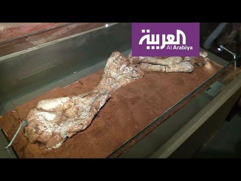العرب اليوم - تعرف على تاريخ أضخم ديناصور في الأرجنتين