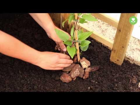 Blühende Kletterpflanzen pflanzen und pflegen