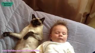 Приколы с котами до слез. Смешные коты. Смешные кошки.