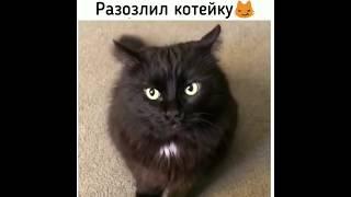 НОВЫЕ смешные ПРИКОЛЫ про животных 2019 года - Funny Pets 2019!