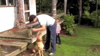 How to approach dogs correctly
