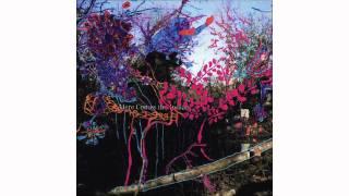 Animal Collective - Slippi