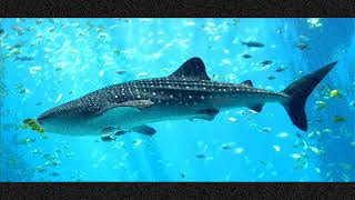 Video Miramare: Velká ryba/ The big fish (part 2, version 1)