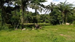 One Rai of Land in Quiet Green Zone for Sale in Ao Nang, Krabi