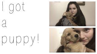 I got a puppy! || Olivia Lacey