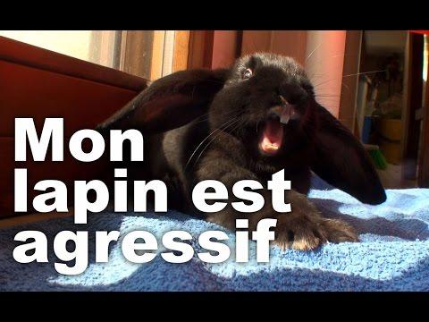 , title : 'Mon lapin est agressif !