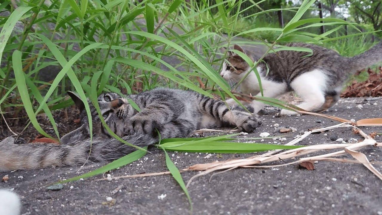 尻尾で遊ぶのが大好きな子猫たち
