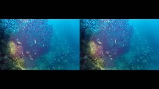 plongée sous-marine dans la Baie de Villefranche sur Mer en 3D pour casque  à réalité virtuelle
