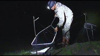 Ночная рыбалка летом на сома