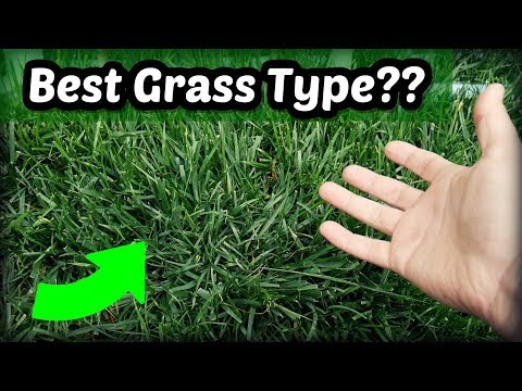 , title : 'Is Tall Fescue The Best Cool Season Grass Type?