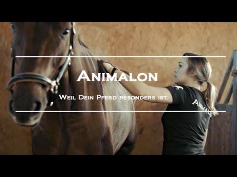 Pferde richtig putzen mit Animalon Pferdebürsten – Die beste Pferdepflege
